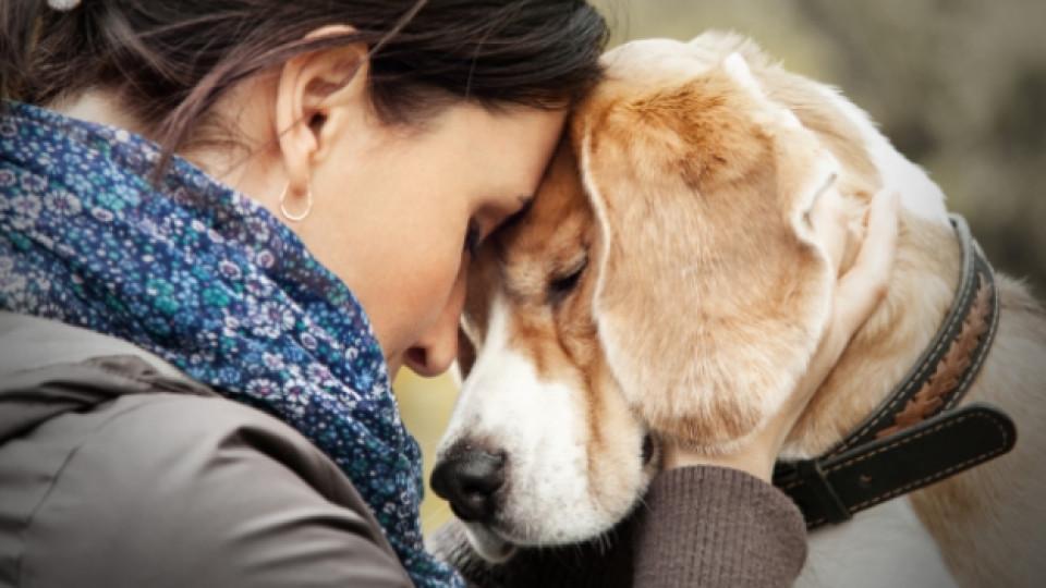 Кучето като моден аксесоар и излишен товар
