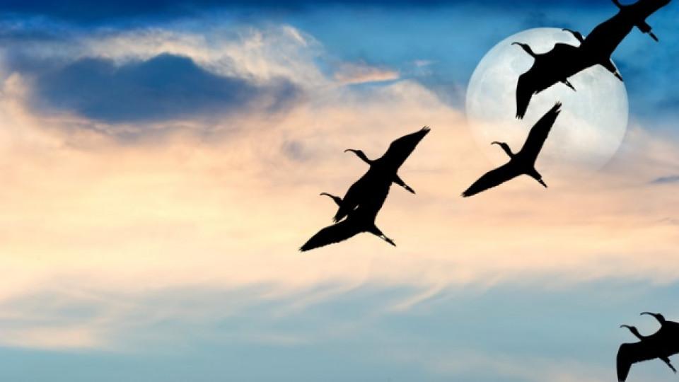 От утре Луната е във Везни - хармония в отношенията и желание за повече контакти