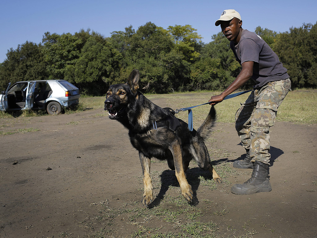 В таен тренировъчен лагер наречен Батъл Крийк, на два часа от Йоханесбург, кучетата се обучават за лов на хора, които убиват животни.