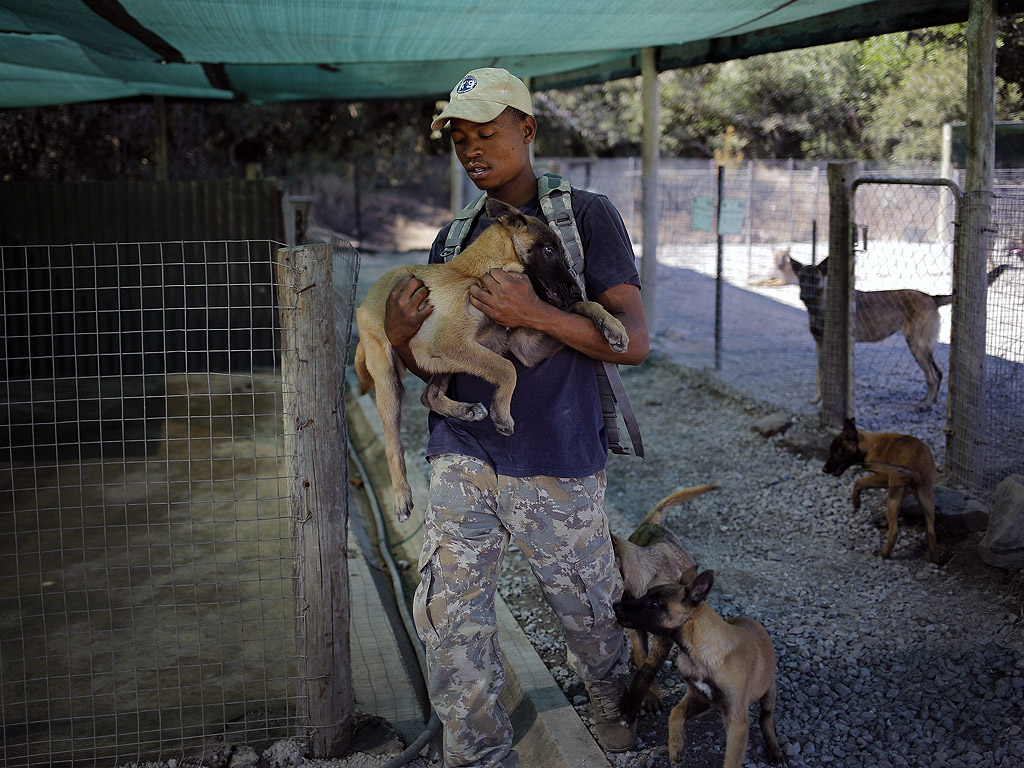 Смята се, че са нужни 400 кучешки единици само в Южна Африка, в тренировъчния лагер сега има около 50 кучета и 40 малки кученца.