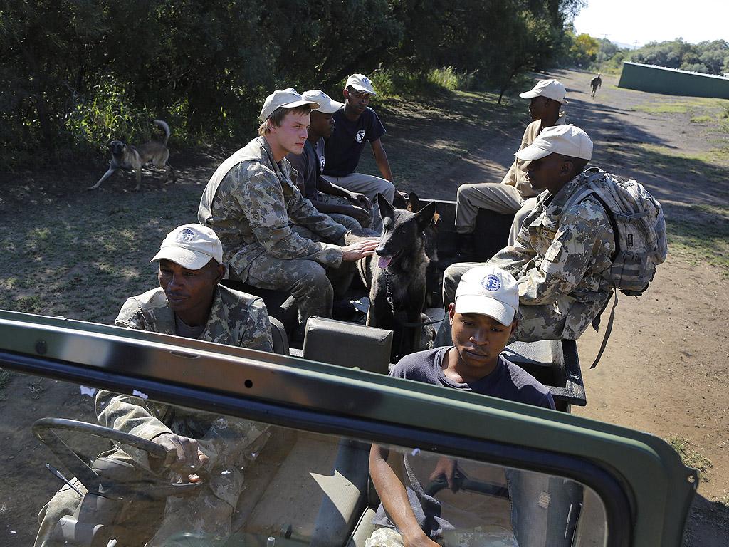 Войниците разчитат на маскировката и оръжията си, за да се защитят от хищници, но най-вече от бракониерите, които стават все по-професионално и добре организирани.