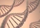 10 факта за ДНК, които може и да ви изненадат