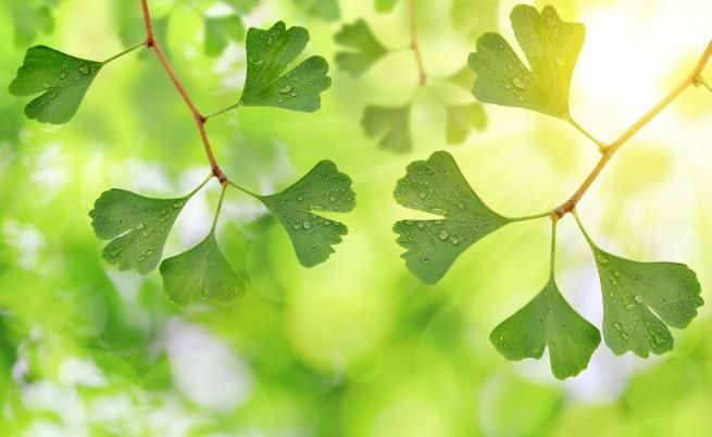 Целебните листенца, които помагат да сме по-добре