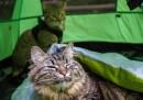 С котка на почивка (снимки)