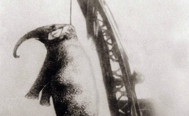 Историята на слона, който беше обесен заради убийство