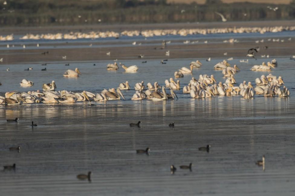- Бургаското езеро (до 1942 година Ваякьойско езеро или Вая) е плитък лиман на брега на Черно море, западно от Бургас Дължината му е 9,6 км, ширината...