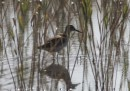 """Местността """"Пода"""" - домът на птиците край Черно море"""