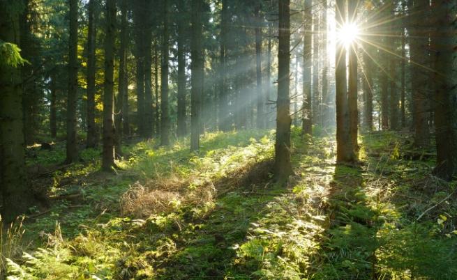 7-те най-големи гори на Земята