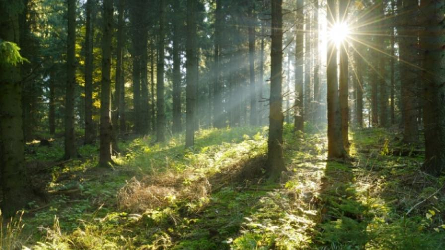 Хиляди дървета за децата на България