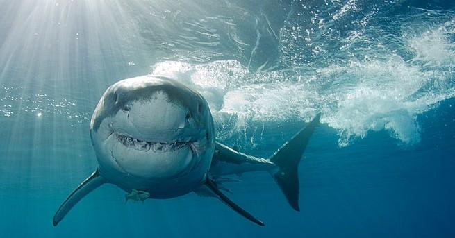 Мъж почина в събота, след като бе нападнат от акула