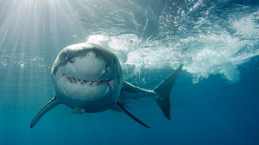 Откриха гигантски акули, изчезнали от планетата