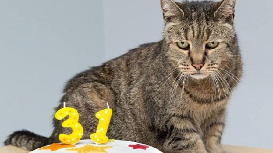 """Котка """"чукна"""" 31 години, все още е в прекрасно здраве"""
