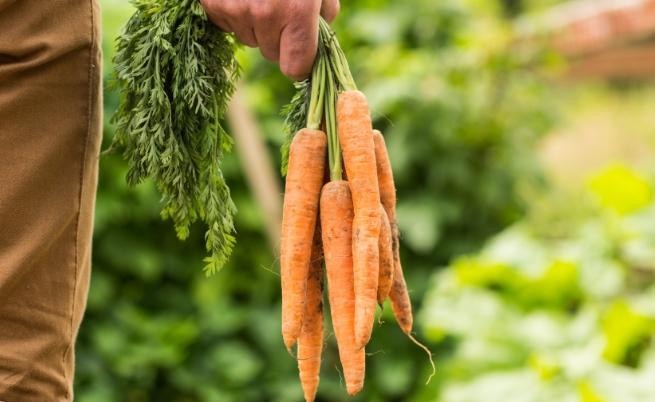 Зеленчукът, който ти напомня за детството, е?