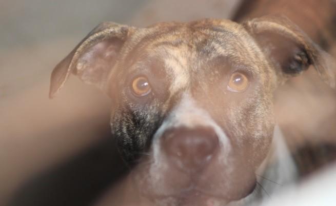 Арестуваха 58 души за бой с кучета край София