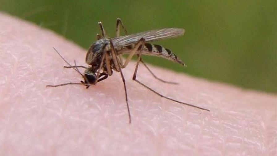 Зараза, пренасяна от комарите, заплашва България
