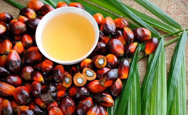 Как Земята потъва в палмово масло
