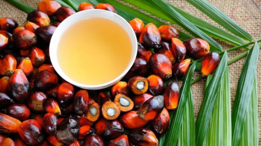 <p>Как Земята потъва в палмово масло</p>