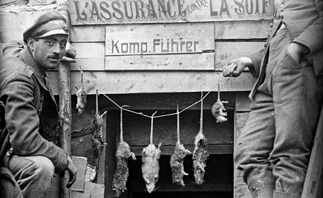 Как се справят военните с многобройните плъхове през Първата световна война