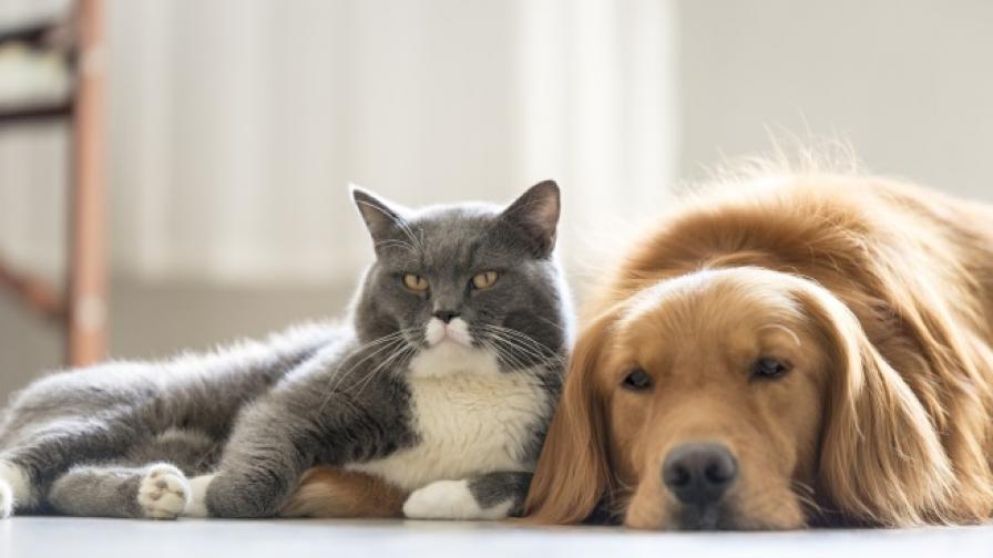 Мъжете глезят кучетата си, а жените - котките си