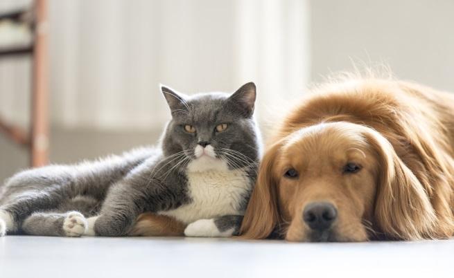 Домашните любимци. Да, внасят малко шум, косми, носите отговорност, но те определено носят и щастие на хората. Проучване, което е публикувано в журнал за личността и социалната психология сочи, че домашните любимци повишават нивата на щастие. Освен това животните помагат на хората да станат по-социални, най-вече собствениците на кучета.