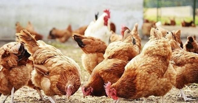 Българската агенция по безопасност на храните (БАБХ) откри две огнища