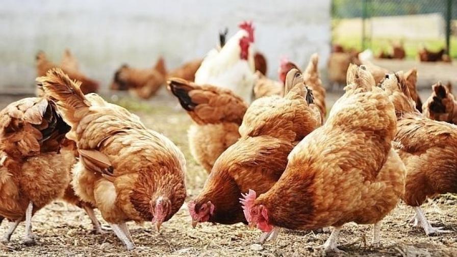 <p>100 000 птици умъртвяват в Хасковско заради птичи грип&nbsp;</p>