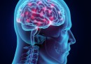 Учени: Мозъкът ни може да произведе собствена захар