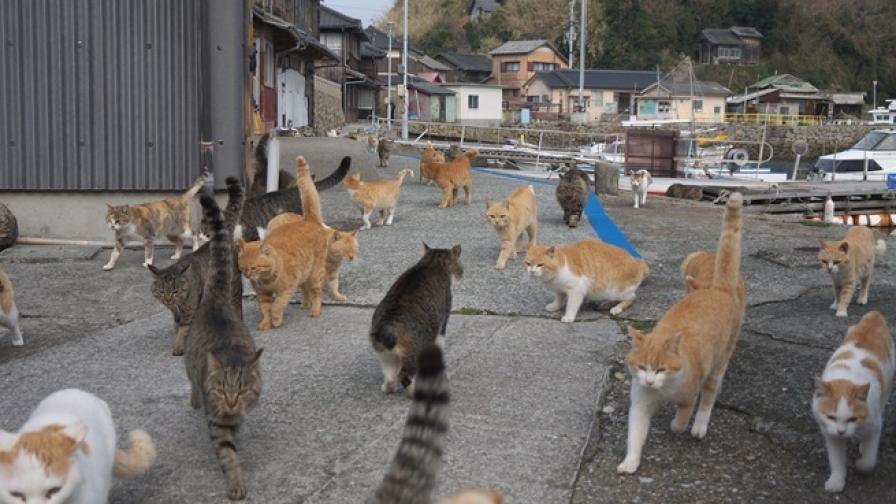 Островът на котките - рай или ад