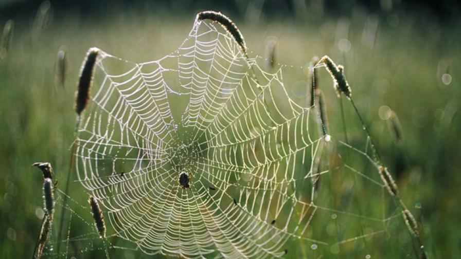 Паяци изплетоха 30-метрово копринено покривало