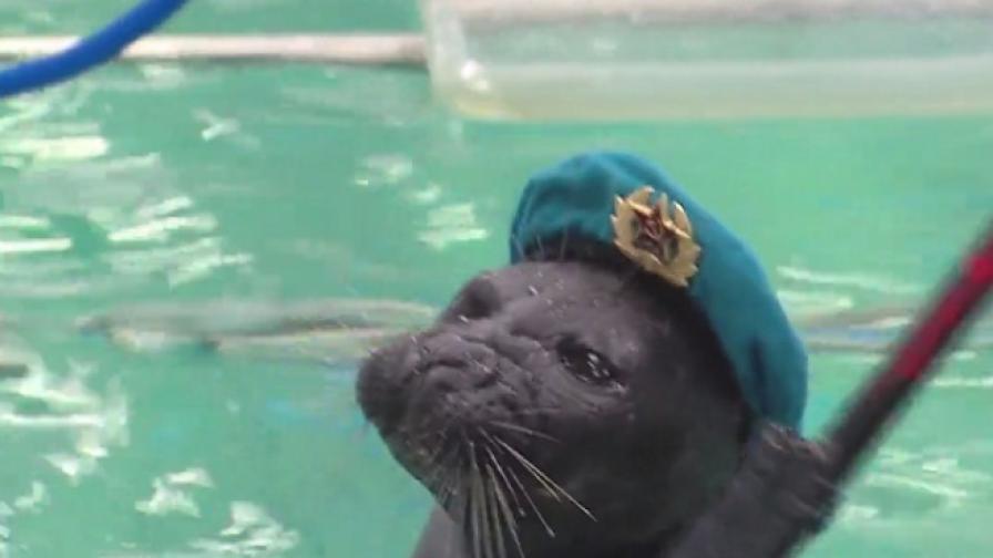 Тито и Лило – тюлените войници (видео)
