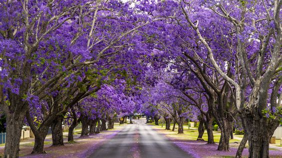 Графтон, Австралия