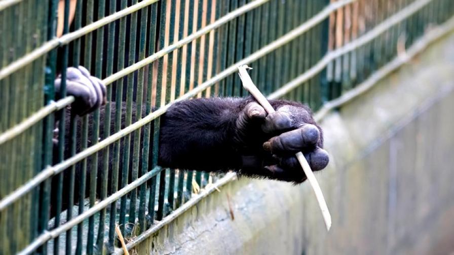 Какво не знаем за експериментите с животни