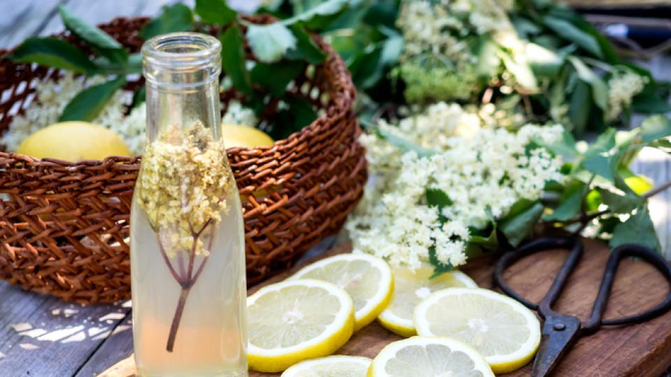 Как да си направим сироп от бъз: най-добрият български естествен имуностимулант