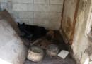 Разбиха нелегален кучкарник край Варна