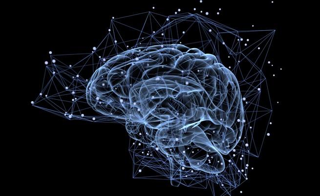 Следва нова фаза на глада – за да се храни мозъкът, тялото започва да разгражда протеините, от които са изградени мускулите. Това се случва около третия ден без храна. Протеините лесно се разграждат до аминокиселини, които след това се трансформират в гликоза. В зависимост от общото здравословно състояние и физическата активност този процес на самоизяждане може да продължи дори седмици.