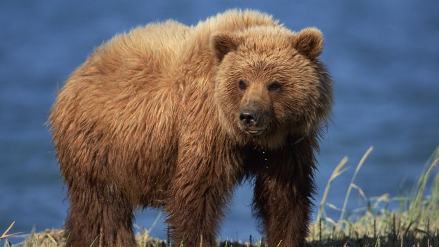 11-годишно момче спаси семейството си от мечка