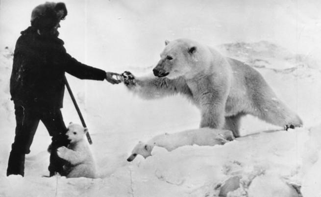 1950: Съветски войници споделят десерта си с полярни мечки