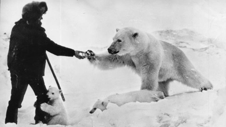 Да споделиш десерта си с полярни мечки