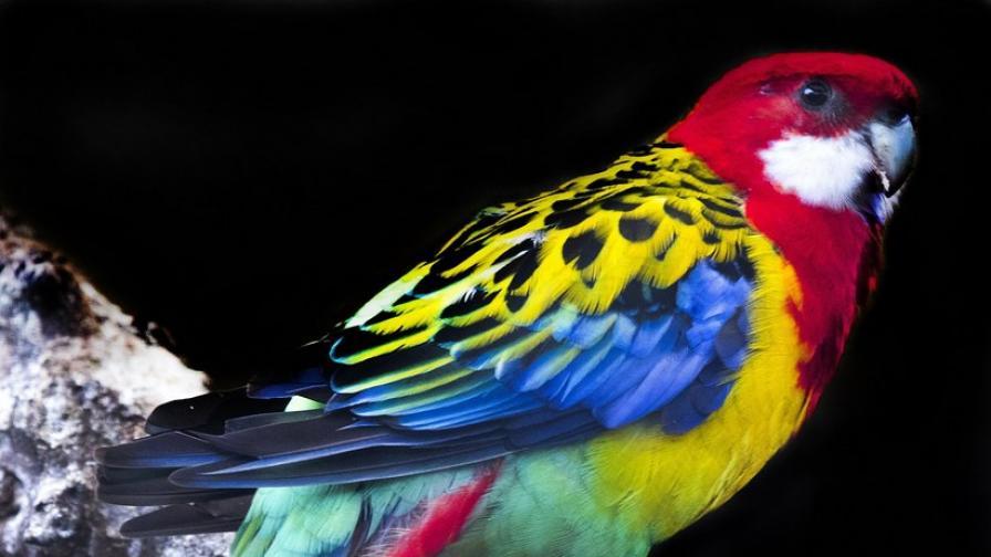 Първите птици са се появили преди 120 млн. години