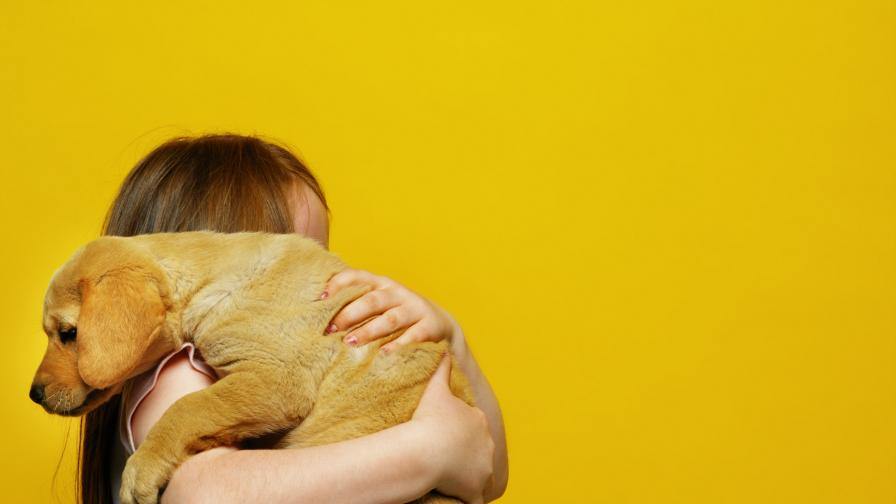 2018 - годината на Жълтото земно куче