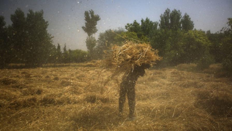 Сирийски фермер носи пшеница