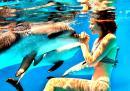 Как делфин се самоуби от любов към жена