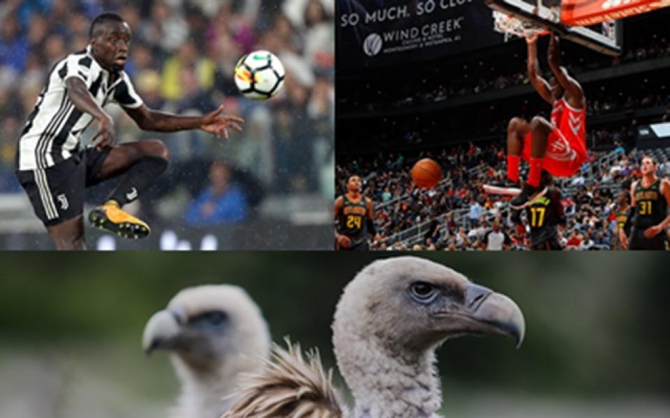 Какво е общото между футболист, баскетболист и лешояд?
