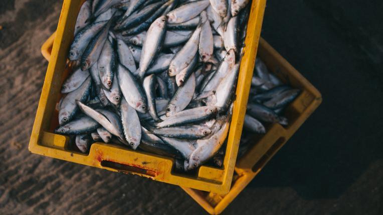 За какво да внимаваме, когато избираме риба за Никулден?