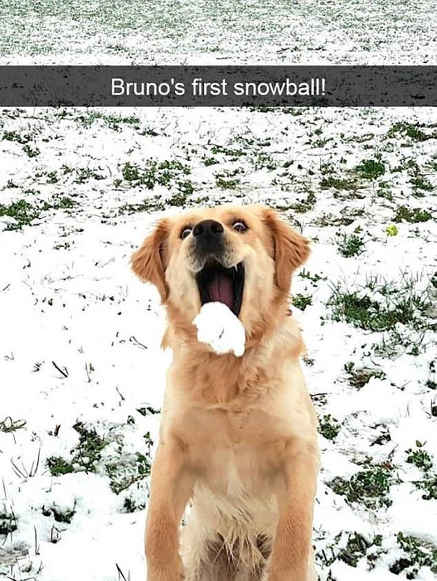 Първата снежна топка на Бруно.