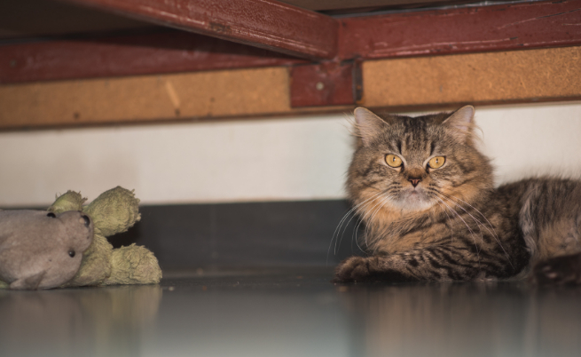 котка под леглото