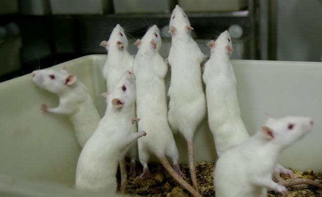 Терапията е дала отлични резултати при мишките.