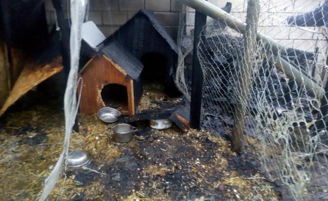 Подпалиха приют за бездомни животни във Варна