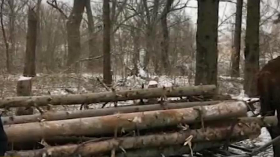 Масовo секат дървета в софийски парк с цел огрев