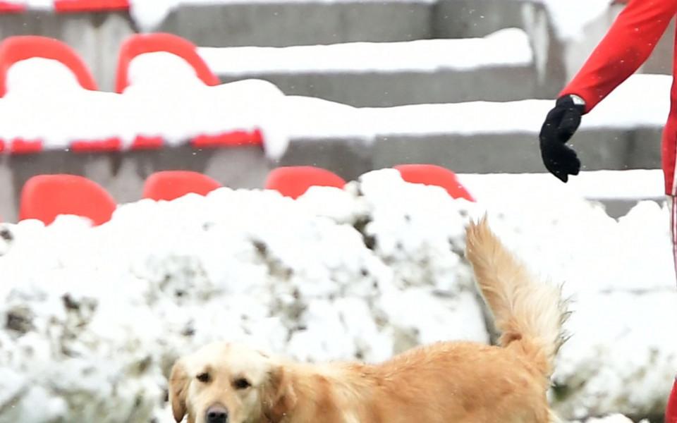 Куче на терена сред играчите на ЦСКА и Струмска слава